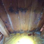 Mold and Mildew Removal Services - Portsmouth, NH 03801