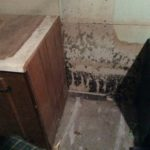 Mold and Water Damage Specialist - Londonderry, NH 03053