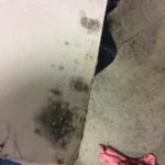 Mold Clean Up Service - Auburn, NH 03032