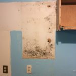 Mold Cleanup — Saco, Maine